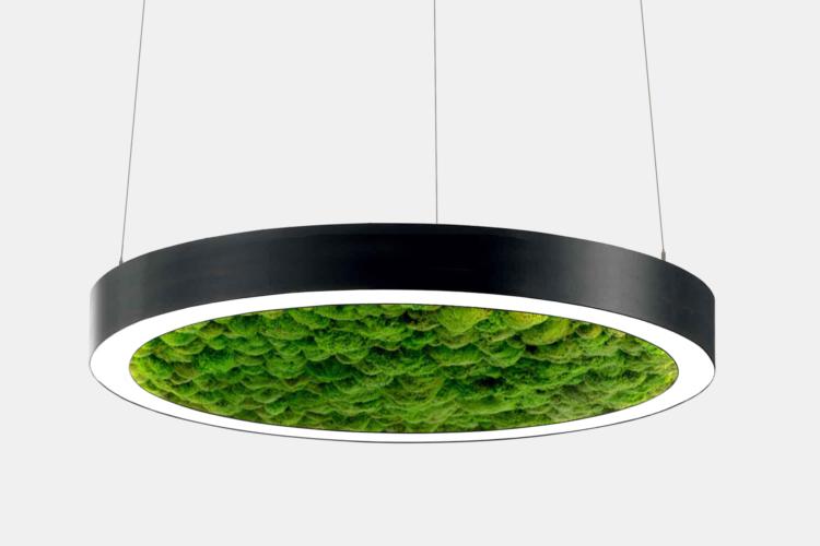Серия Moss. Кольцевые светодиодные светильники со стабилизированным мхом